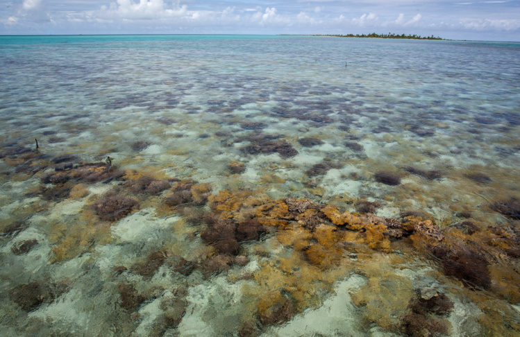 La Polynésie française compte à elle seule 20 % des atolls de la planète. Photo : AFP