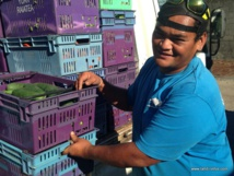 La Sipac favorise les petits agriculteurs locaux