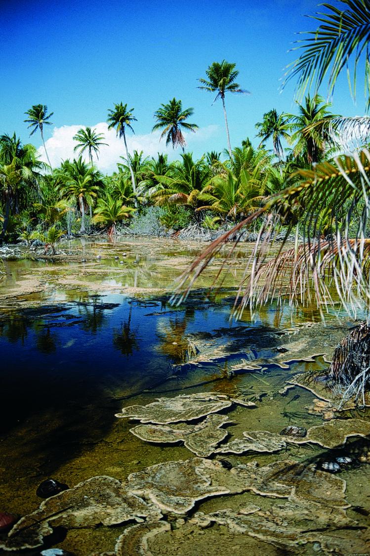 Une très belle mare à kopara, comme on en voit dans tous les atolls des Tuamotu. À Fakarava, elles sont souvent vastes, pures et profondes de plus de deux mètres. Idéal pour nager.