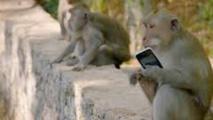 Inde: un singe chapardeur attaché et encagé à Bombay