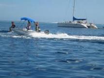 Le bruit des bateaux double la mortalité de poissons par prédation
