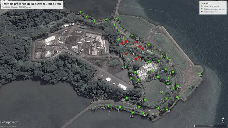 La fourmi de feu (points rouges) est largement répartie sur le site de Tatutu. La municipalité appelle à la prudence de la population, mais surtout à la vigilance. Aucun pot de fleurs ou de terre ne doit sortir de ce site.