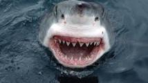 Record d'attaques de requins dans le monde en 2015, mais pas plus de morts