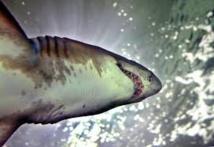 Un kitesurfeur mordu par un requin en Nouvelle-Calédonie