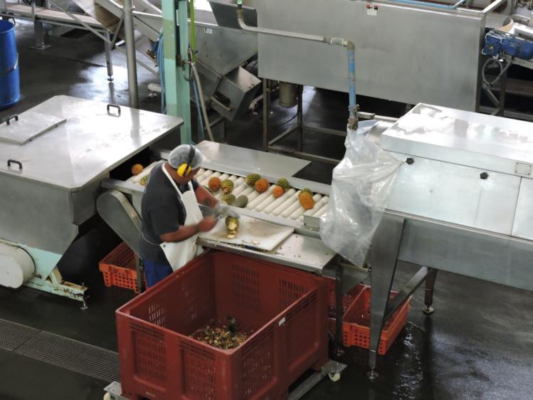 Près de 50 personnes travaillent à l'usine de Jus de fruits de Moorea.