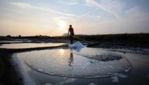 Récolte de sel en juillet 2013 à L'Epine sur l'île de Noirmoutier ( AFP - Jean-Sébastien Evrard )