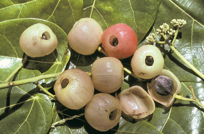 Carnet de voyage - Makemo, les fruits du sel