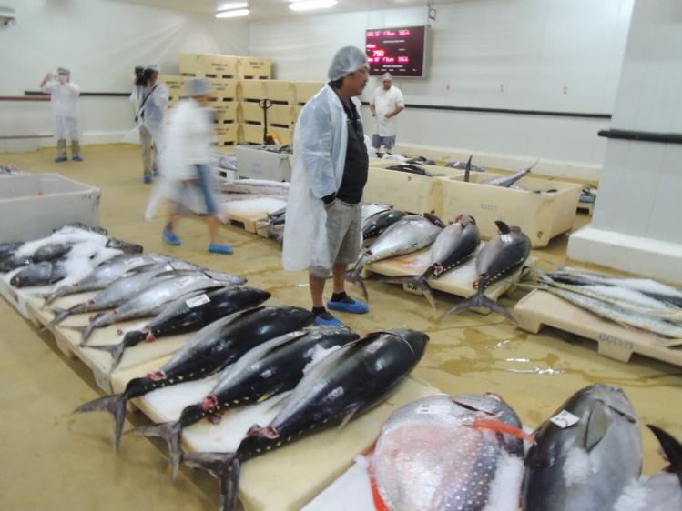 Tous les ans, les armateurs perdent généralement un peu de moins de 50% de leur pêche à cette période de l'année