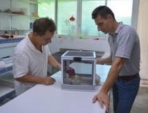 Au laboratoire d'entomologie médicale de l'ILM à Paea, Hervé Bossin (à droite) et Jérôme Marie (à gauche) avec une des cages où sont enfermés des moustiques biologiquement modifiés. C'est à partir de la colonie de ces moustiques modifiés par une bactérie naturelle que le laboratoire de Paea peut produire chaque semaine environ 45 000 moustiques mâles qui sont relâchés à Tetiaroa. Ces moustiques modifiés s'accouplent avec les femelles sauvages de l'atoll mais en raison de leur incompatibilité ne peuvent assurer de descendance. En quelques mois, la population des moustiques à Tetiaroa s'est effondrée.