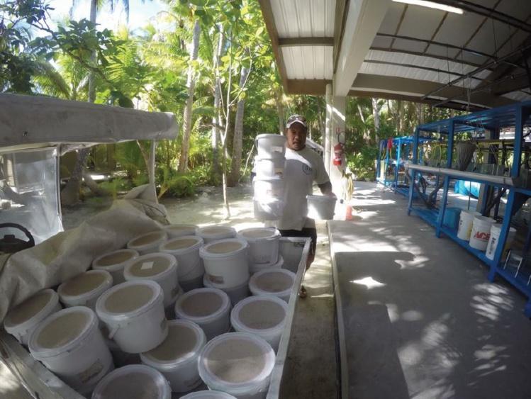 Des moustiques biologiquement modifiés et stériles prêts à être relâchés à Tetiaroa.