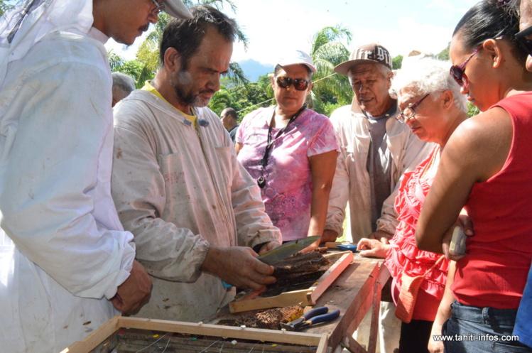Une formation pour posséder les clés du métier d'apiculteur