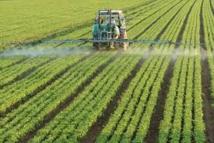 Sans pesticides, le problème des impasses technologiques sur les cultures