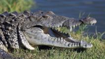 Un touriste russe tué par un crocodile en Indonésie