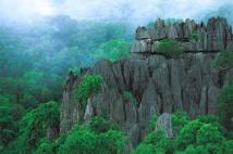 La moitié des sites naturels classés par l'Unesco menacée