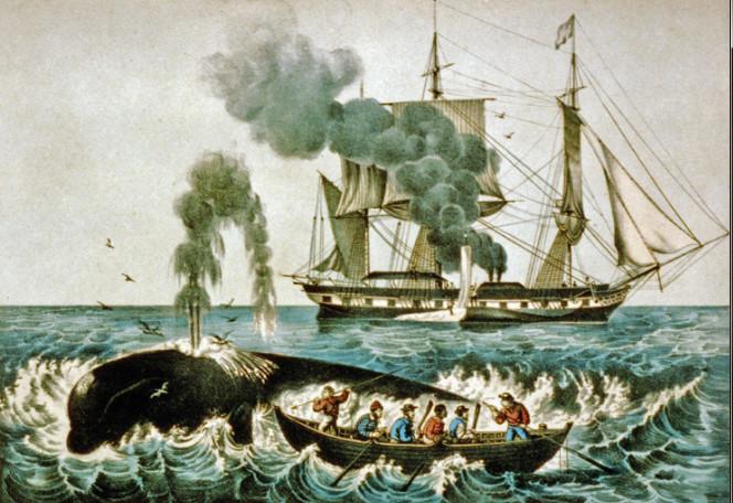 Scène de chasse à la baleine