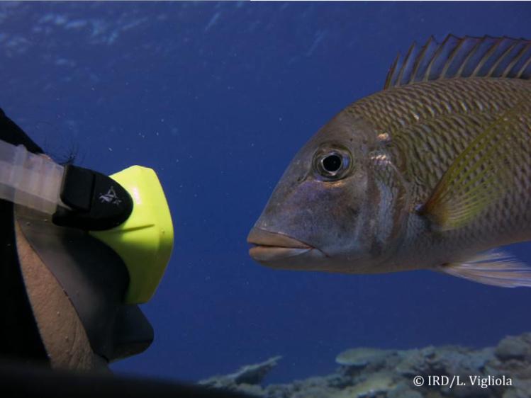 L'atoll de Ahunui n'a pas de population permanente. Lors de leur expédition, les scientifiques y ont rencontré trois personnes qui étaient sur l'île depuis deux mois pour le coprah. Sous l'eau, le spectacle est exceptionnel : une forte biomasse dominée par les prédateurs et comportement caractéristique des zones Pristine. L'humain n'y est pas craint.
