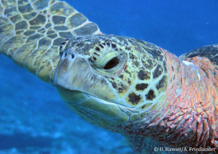 Très peu de récifs préservés dans nos eaux (étude)