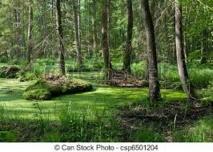 Greenpeace contre l'abattage d'arbres de la plus ancienne forêt primaire d'Europe