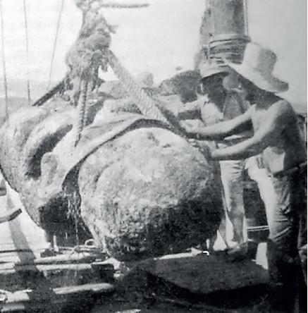 Le transport sur le navire La Denise. Photos L'illustration.