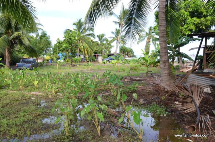 "Mahana Beach : ""On ne s'en ira pas d'ici"", martèlent les irréductibles d'Outumaoro"