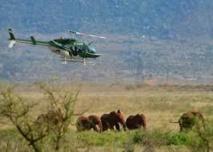 Kenya: des colliers GPS pour suivre les éléphants et les protéger d'un chemin de fer