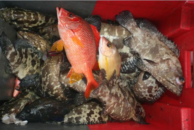 Poissons de pêche