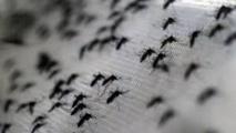 Zika: les moustiques, des porteurs de virus difficiles à éliminer