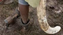Le Kenya se mobilise pour en finir avec le commerce illégal d'ivoire