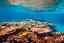 Grande barrière: de nombreux récifs risquent de mourir dans les 20 prochaines années