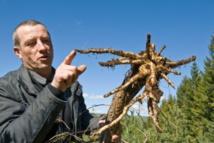 Un éleveur montre des racines dévorées par des rats taupiers le 27 avril 2016 à Allanche - Thierry Zoccolan (AFP)