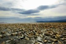 """Au Chili, une île de pêcheurs s'embrase à cause de la """"marée rouge"""""""