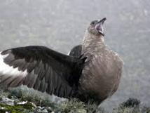 Le réchauffement réduit la taille et la morphologie d'oiseaux, menaçant leur survie