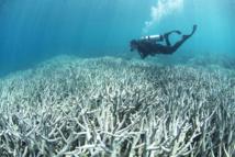 En Thaïlande, sites de plongée fermés pour mettre les coraux au repos des touristes