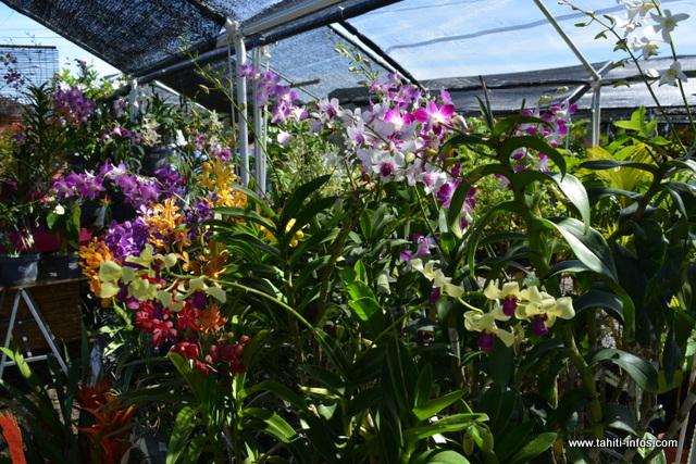 les exposants vous proposent des plantes aussi variées les unes que les autres.