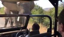 Action ! Un éléphant charge l'acteur Schwarzenegger