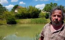 France: un couple condamné à combler sa mare pour cause de grenouilles bruyantes