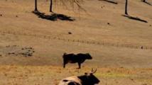 Un Etat australien achète un immense élevage pour protéger la Grande barrière