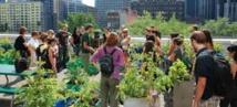 Agriculture urbaine: nourrir les villes, guérir les urbains