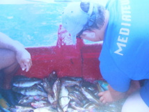 Les poissons ont été remis à l'eau sur ordre d'un officier de police judiciaire.
