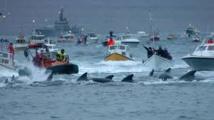 Iles Féroé : ouverture de la chasse controversée au dauphin pilote