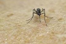 Premier décès du Zika aux Etats-Unis dans la zone continentale