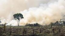 La perte de biodiversité menace les écosystèmes de la planète