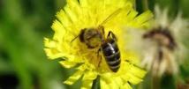 Biodiversité: les députés LR saisisssent le Conseil constitutionnel