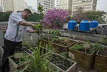 Au Brésil, les détritus des restaurants alimentent leurs propres potagers