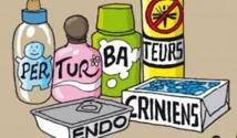 Perturbateurs endocriniens: l'Anses propose une classification en trois catégories