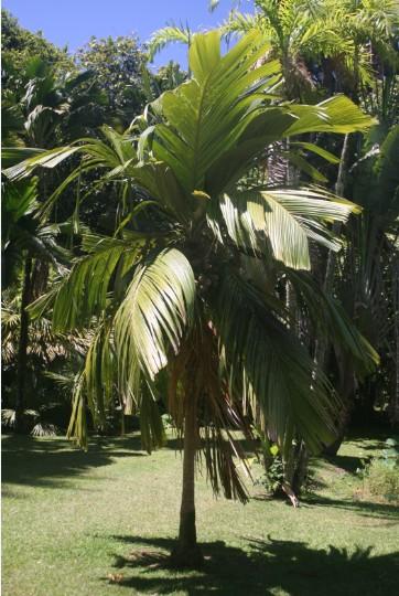 Carnet de voyage : Nuku Hiva : sur la piste des derniers enu de Taipivai