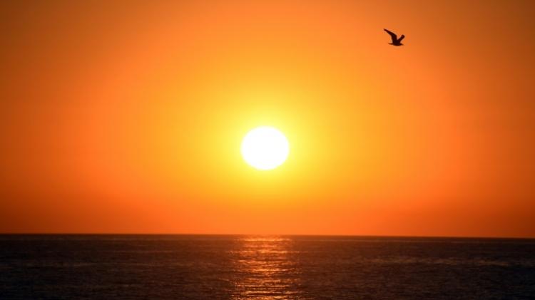 Juillet a été le mois le plus chaud jamais enregistré