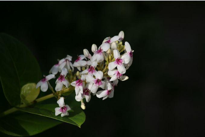 """Carnet de voyage - Les """"fleurs du sel"""" de Fakarava (2e partie)"""