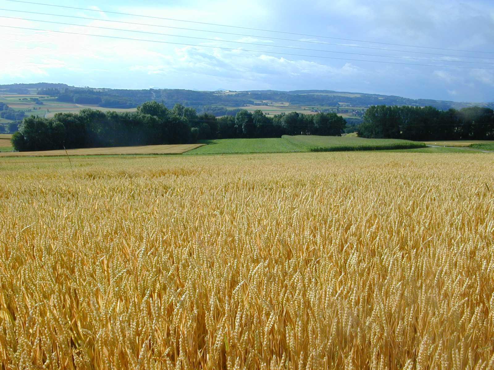 """Les """"normes insupportables"""" tuent l'agriculture, selon un rapport du Sénat"""