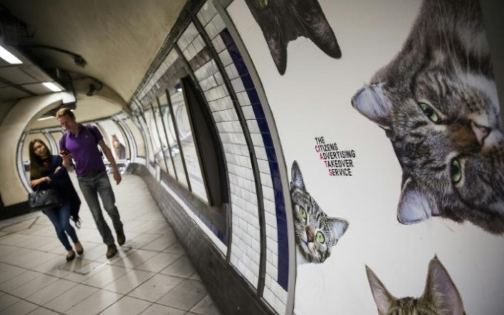 Les chats chassent la pub dans une station du métro londonien